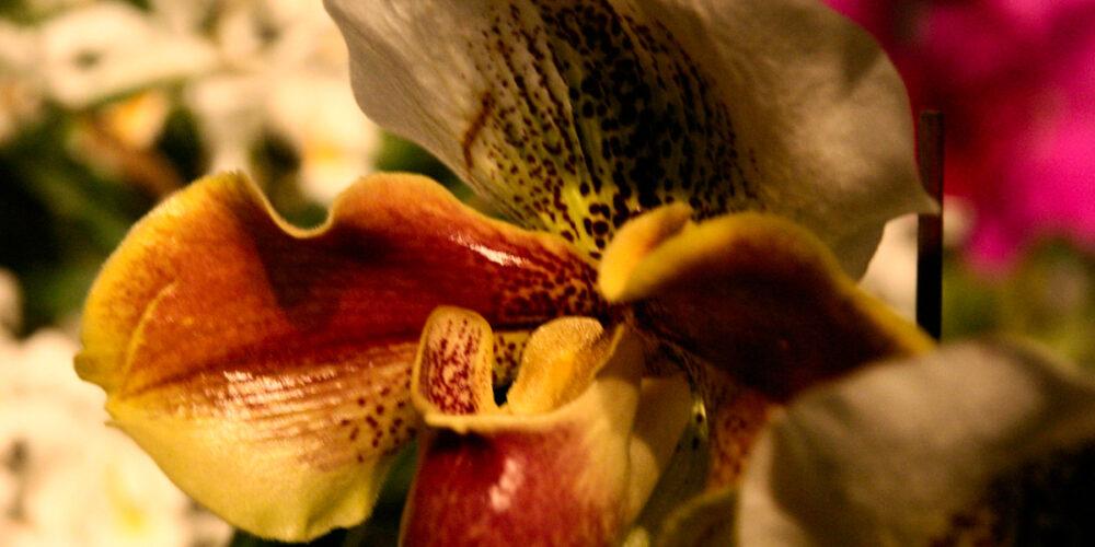 Ein Blumenmeer im Stollen