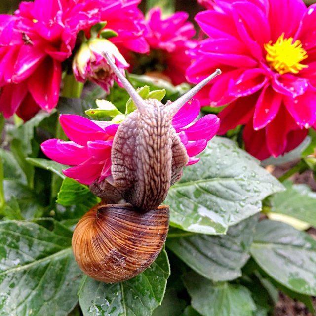 Die Honigschnecke im Rosental very little Adventure schnecke blumen instagramhellip
