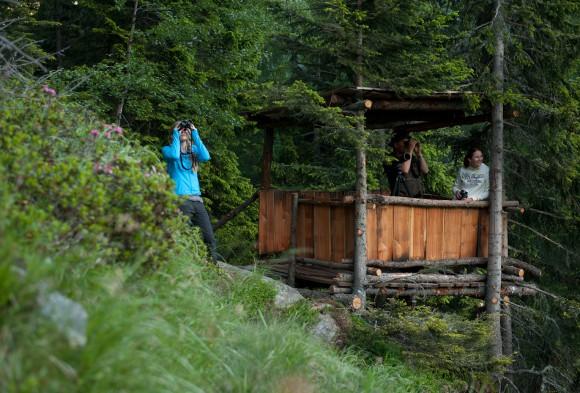 Ruf der Wildnis. Foto: kaernten.at / Gerdl Franz