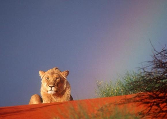 Faszinierende Camp-Safari. Foto: Georeisen