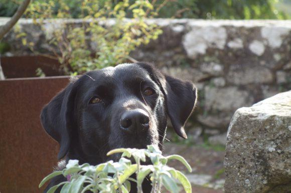 Urlaub mit Hund in der Toskana, Foto Eva Kral