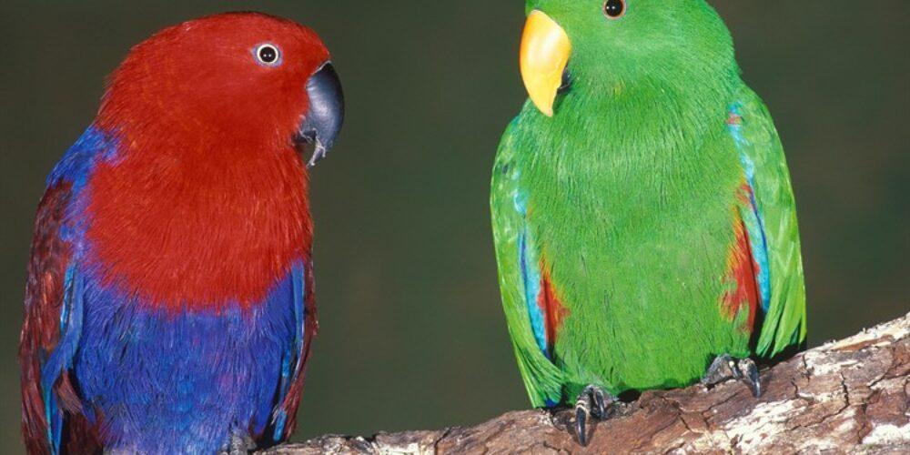 Ausflugsziel Vogelpark am Turnersee in Kärnten