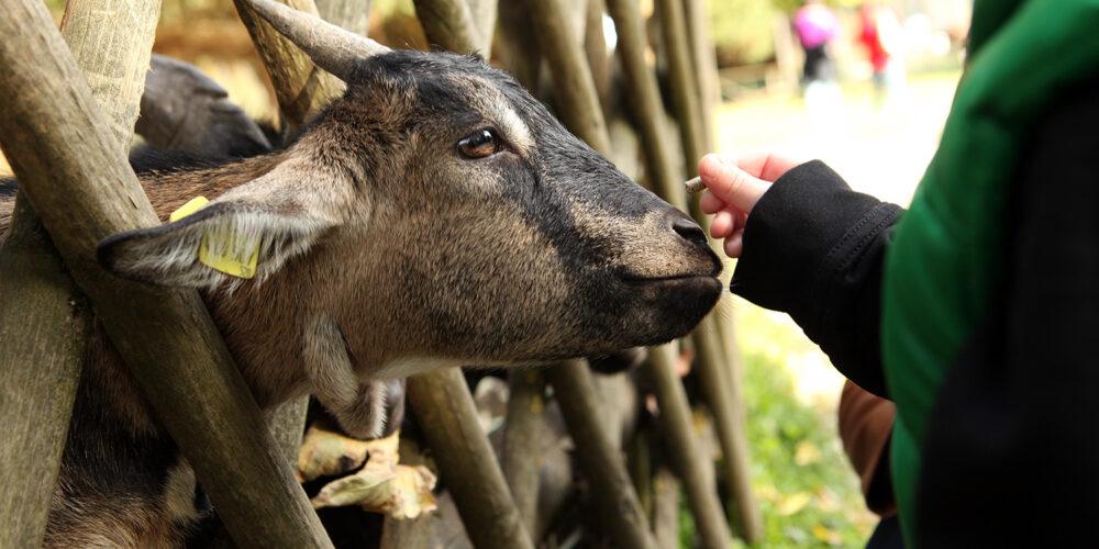 Erlebnis Tierpark Rosegg – Der perfekte Familienausflug