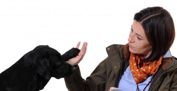 Labradordame Nala ist eine wundervolle Reisegefhrtin – vorausgesetzt man hlt sich an ihre Spielregeln.