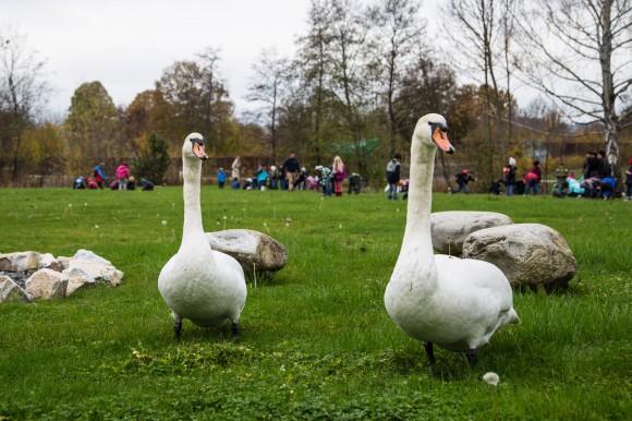Diese zwei Bewohner der Seepark-Gartens waren ein wenig irritiert.