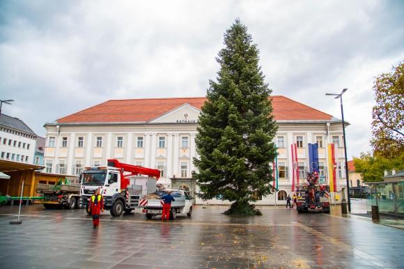 Der Christbaum 2014. Foto: pixelpoint